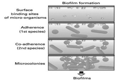 What is a Biofilm | Wellness Balance